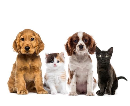 Pet Ear Clinic   Pet Allergy   Pet Dermatologist   Veterinary Dermatologist   VetDERM Clinic