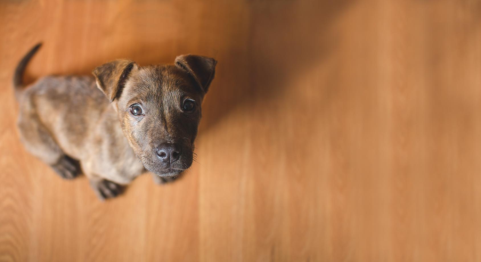 Pet Dermatologist | Veterinary Dermatologist | VetDERM Clinic