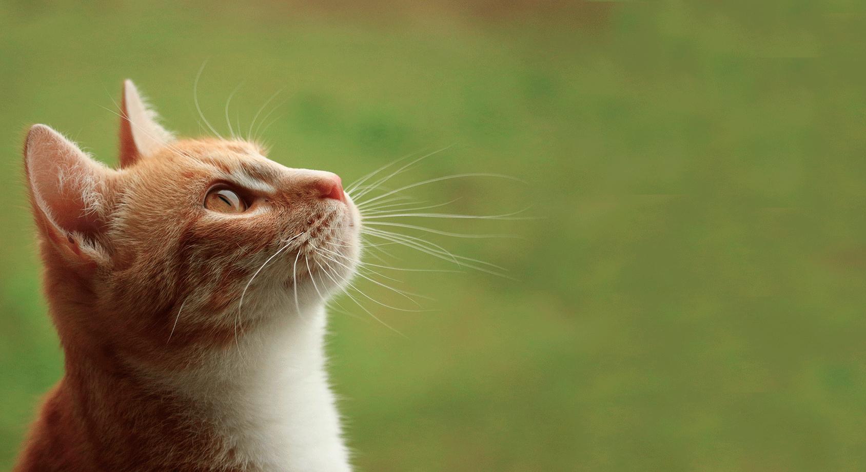 Pet Ear Clinic | Pet Allergy | Pet Dermatologist | Veterinary Dermatologist | VetDERM Clinic