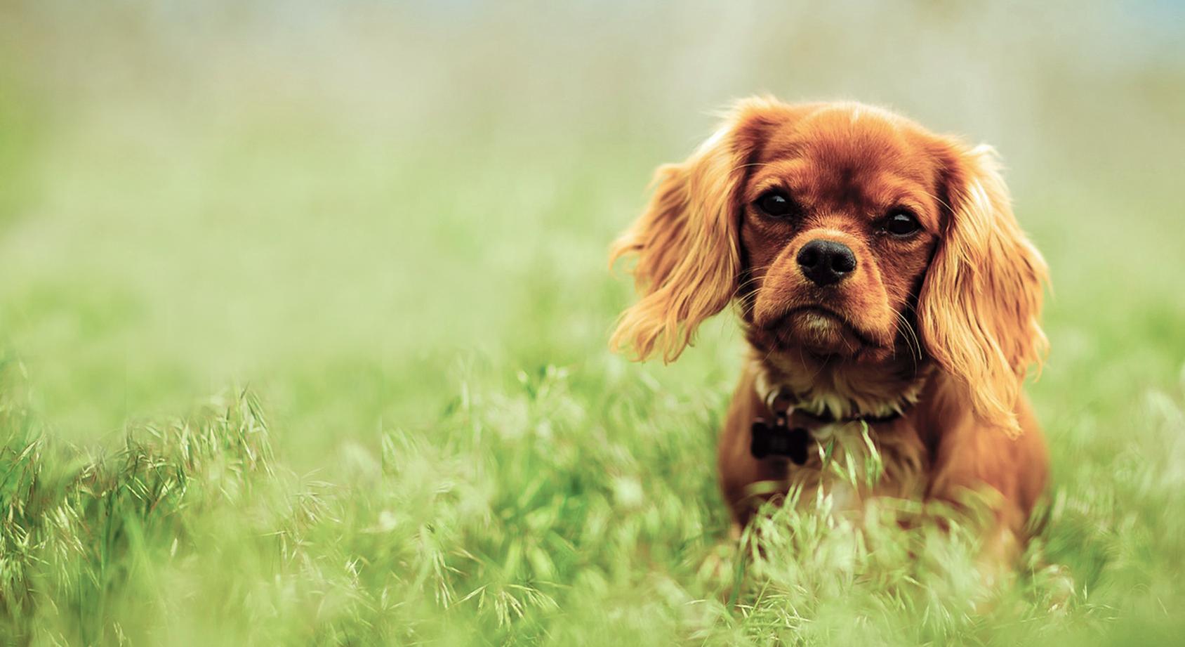 Veterinary Dermatologist | VetDERM Clinic