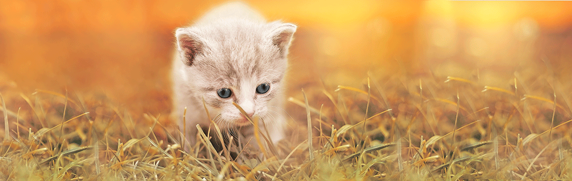 Pet Allergies | Allergen Specific Immunotherapy (ASIT) | VetDERM Clinic