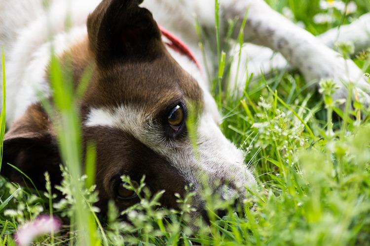 Dog Licking And Biting Base Of Tail