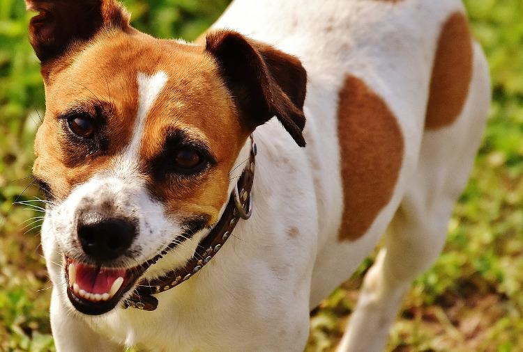 Ask an Expert: Seasonal Pet Allergy Symptoms