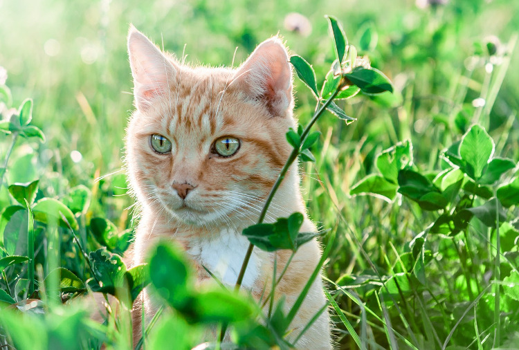 Recognizing and Treating Pollen Allergies in Cats | VetDERM Clinic